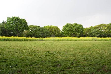 Rape Blossom Park