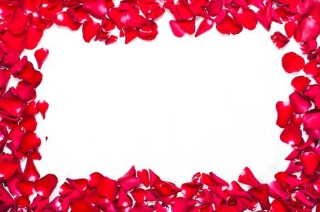 flower petals: rose corolla frame