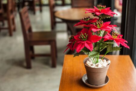 faked: Red beautiful Christmas flower on a table in a coffee shop