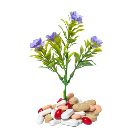 Plant and medicine Stock Photo - 18457578
