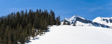 Pine Forest on Snow Field with Mountain Background photo