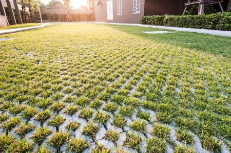 pattern of grass on floor made of brick against sunlight Stock Photo - 21041663