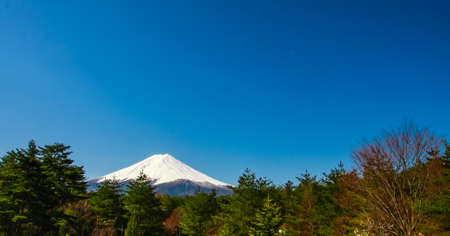 Fuji scene with trees photo