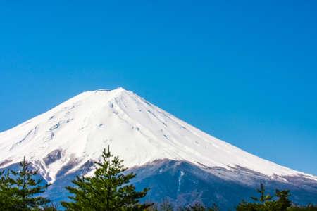 Fuji scene with trees Stock Photo