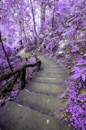 natural love: Imaginary scene of purple forest with stairway Stock Photo