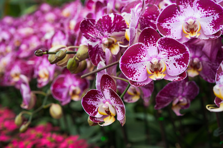 Pattern of pink and violet orchid plant