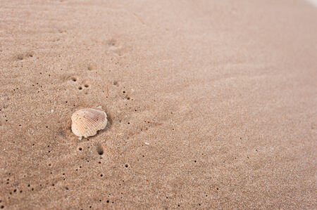 footmark: Shell on beach Stock Photo