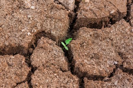 pflanze wachstum: winzigen Pflanzenwachstum in grauen Boden Lizenzfreie Bilder