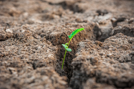 tiny plant growth in grey soil photo