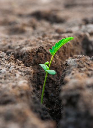 land plant: tiny plant growth in soil Stock Photo