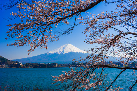 cherry blossom in japan: Fujisan , Mount Fuji view from Kawaguchiko lake, Japan with cherry blossom Stock Photo
