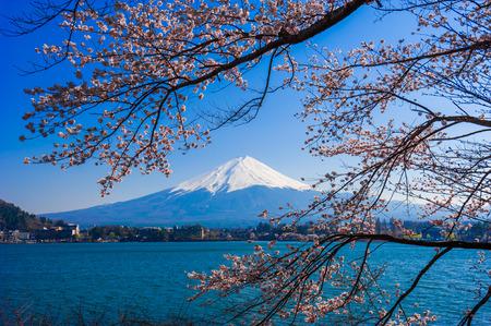 cerezos en flor: Fujisan, vista del monte Fuji del lago Kawaguchiko, Japón con flor de cerezo