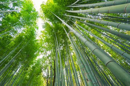 Bamboo grove, bamboebos bij Arashiyama, Kyoto, Japan Stockfoto