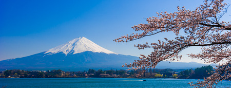 Fujisan , Mount Fuji view from Kawaguchiko lake, Japan with cherry blossom 免版税图像