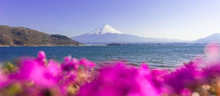 kawaguchi ko: Fujisan , Mount Fuji view from Kawaguchiko lake, Japan with blur pink foreground