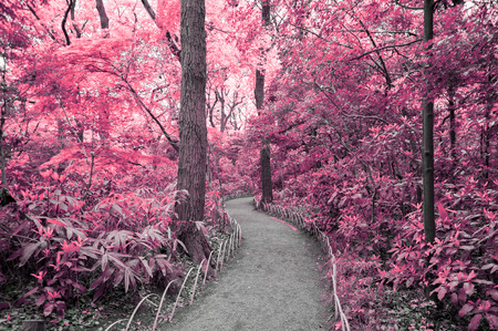 saturate: Fantasy Scene of red forest with walking path