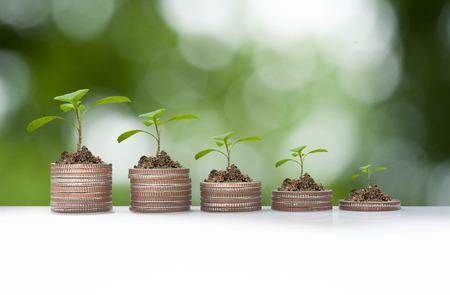 crecimiento planta: El crecimiento de la planta en la pila de monedas, conceptual de negocios Foto de archivo
