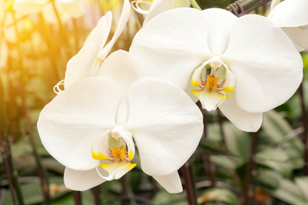 beauteous: Close up white orchid Stock Photo