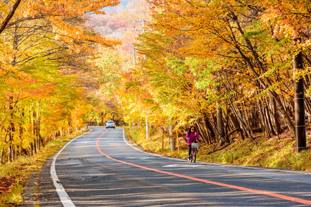 AOMORI, JAPAN - OCTOBER 27th, 2017: Scene of woman ride bicycle along the road with autumn red leaf in Aomori, Japan. Beautiful country side along the road great time for travel.