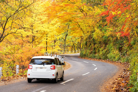 Scene of cars drive along the road with autumn red leaf in Aomori, Japan. Beautiful country side along the road great time for travel. Banco de Imagens