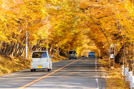 Scene of cars drive along the road with autumn red leaf in Aomori, Japan. Beautiful country side along the road great time for travel. Stockfoto