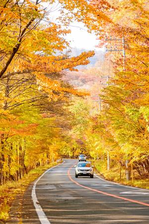 Scène van auto's rijden langs de weg met de herfst rood blad in Aomori, Japan. Prachtig platteland langs de weg geweldige tijd voor reizen.