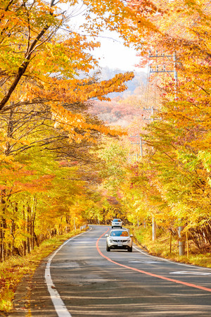 Scene of cars drive along the road with autumn red leaf in Aomori, Japan. Beautiful country side along the road great time for travel. Stock Photo