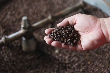 Hand of man test roasted coffee bean during process