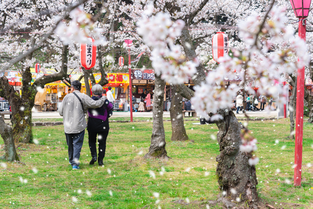 Elderly couple wander in Hanami or Sakura, Cherry blossom festival in public park with shop sell food and snack, on lantern said Wakayama cherry blossom festival