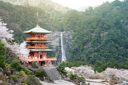 Nachi Taisha in Kumano Kodo pilgrimage routes, the tallest water fall in Japan with three strolley pagoda in sakura or cherry blossom season Éditoriale