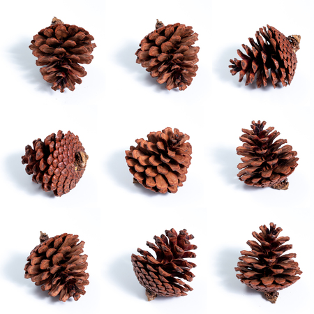 Nine pine cones on white background with shadow on floor Imagens