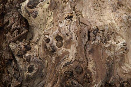 Gnarly Tree Abstract