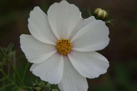 흰 꽃 스톡 콘텐츠