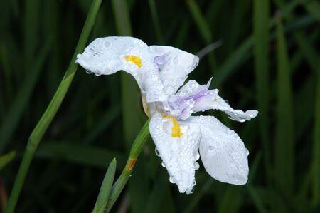 Dew on White Flower Imagens