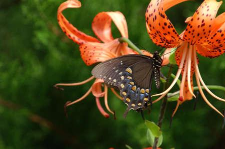 Rainbow Butterfly Stock Photo