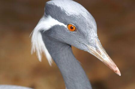 Gray Bird Stock Photo