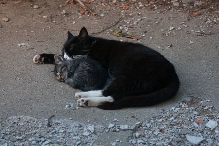 Mother barn cat sleeping with one of her kittens.
