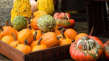 Fall gourd display.