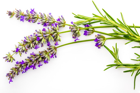 Bouquet of flowers and lavender seeds and green rosemary on white background, isolated.