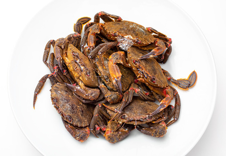 Galician Necoras (from Galicia). Delicious seafood from the Bay of Biscay and Atlantic. Fresh and alive crabs isolated on white background. Imagens