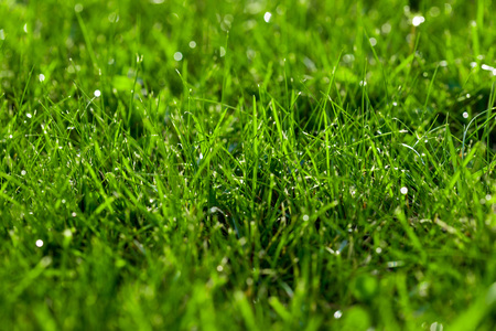 Close-up green lawn, fresh and wet. Beautiful texture with bokeh and sun flares.