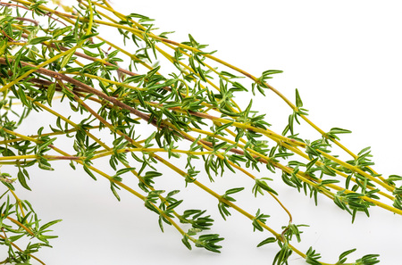 Bouquet of fresh and raw thyme. Isolated on white background. Ingredient of Mediterranean cuisine and healing home remedy. Home remedy healing, disinfectant, relieves breathing problems, with anti-aging flavonoids, for indigestion, strengthens the immune system,…