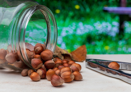 Hazelnuts in glass jar with cascador. On a wooden table in the field. Green background.