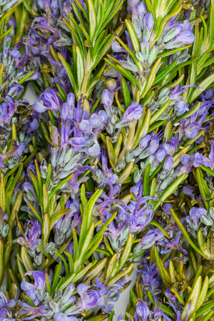 Bouquet of fresh rosemary and green with delicate purple flowers. Close-up.