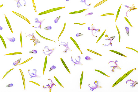 Texture of fresh rosemary and green leaves with delicate purple flowers. Isolated on white background.