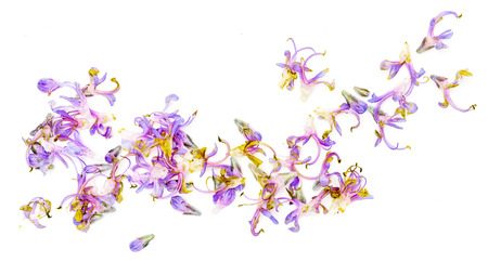 Fresh rosemary and green leaves with delicate purple flowers. Isolated on white background.
