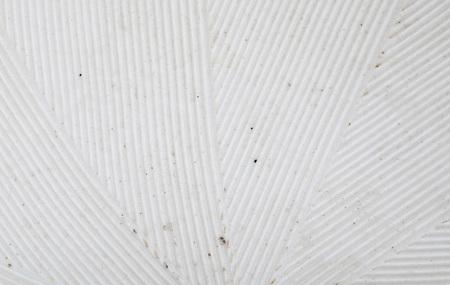 Delicate striped texture (stria) in white. Close-up of Suribachi and Surikogi (Japanese streak mortar). Banco de Imagens