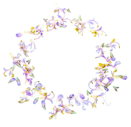 Circular frame with delicate purple flowers of fresh rosemary. Isolated on white background.