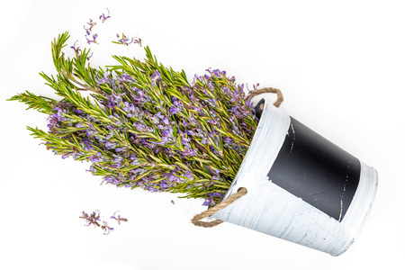 Bouquet of fresh rosemary and green with delicate purple flowers. Isolated on white background.
