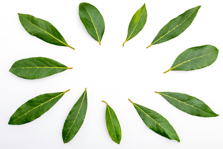 Fresh and dry bay leaves. Isolated on white background. With space to insert your text.